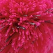 Dívčí čepice FLORES Kenai Kids Reflex - růžová - reflexní prvky v bambuli